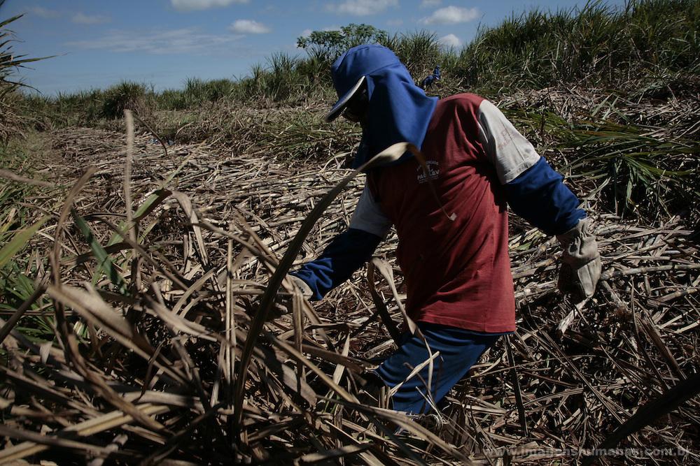 trabalhadores rurais cortadores de cana, na maioria migrantes nos canaviais da usina Louis Dreffeus em Guariba, Sao Paulo.workers rural cane cutters, in most migrants in the sugar cane plantations of the plant Louis Dreffeus in Guariba, São Paulo