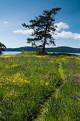 Tree and Wildflowers of Yellow Island, San Juan Islands, Washington, US
