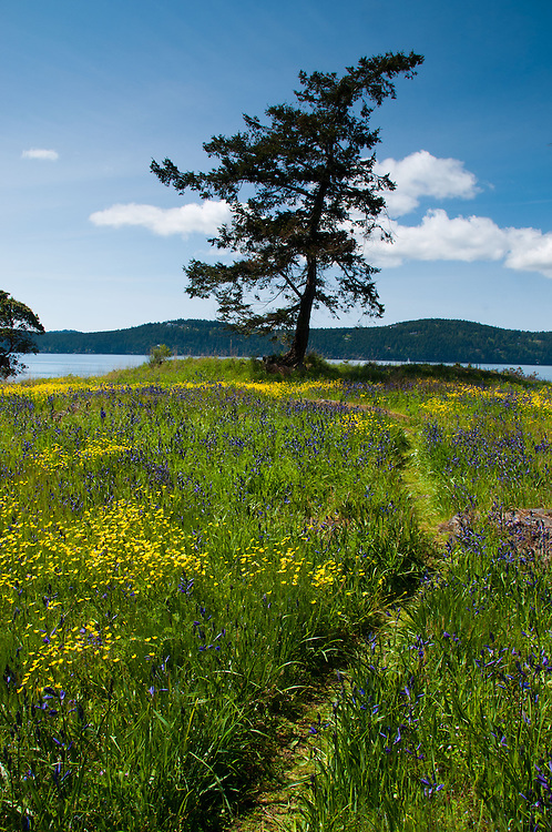 Tree and Wildflowers of Yellow Island, San Juan Islands, Washington, US
