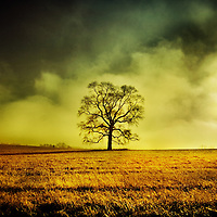 A stormy sky above an old tree in a field