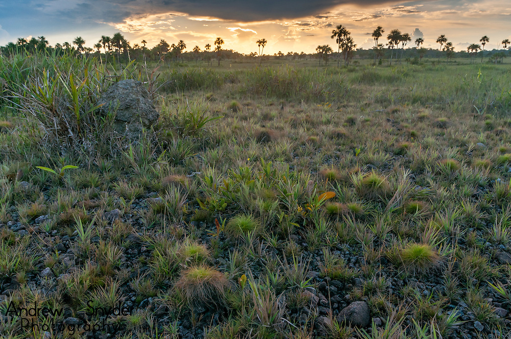 Sunset over the South Rupununi Savanna, Guyana.