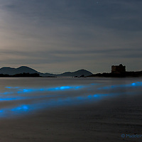 BIOLUMINESCENCE in the heart of Ballinskelligs, Southwest Kerry, Ireland. <br /> <br /> A natural phenomenon lights up the water of Ballinskelligs Beach, making the sea shine with a surreal blue light.<br /> <br /> The surreal scene arises not from magic, but from plankton that have evolved to glow in order to startle or distract fish and other potential predators. Some scientists call it the &ldquo;burglar alarm effect&rdquo;: by lighting up, the plankton draw even larger predators that, in turn, eat the animal threatening them. The phosphorescence only occurs when the microorganisms, which exist worldwide, are agitated &ndash; such as when the water crashes onto the shore, someone steps on the wet sand or a paddle hits the waves.