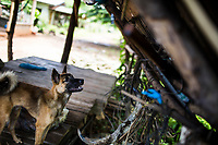 One of the family dogs outside of the Thanthongdee home in Sakon Nakhon, northeastern Thailand.