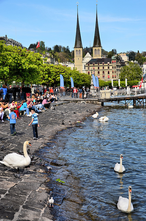 Swans at Schwanenplatz in Lucerne, Switzerland<br />