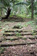 El Parque nacional Camino de Cruces es un parque nacional situado a 15 km al norte de la ciudad de Panamá, en la provincia de Panamá, en el país homónimo. Fue creado en 1992 con el fin de conservar los ecosistemas y las especies de los bosques tropicales<br /> <br /> Cuenta con una superficie de 4.000 hectáreas en forma que corredor. Se trata de un corredor que conserva tramos del antiguo camino de la época de dominación española, Camino Real, que unía los núcleos de población de Panamá y Nombre de Dios. Hoy sirve de unión entre los parques nacionales de Soberanía y Metropolitano.<br /> <br /> El clima es tropical lluvioso, con vientos caribeños, y la vegetación es, por consiguiente abundante. Cabe destacar el roble y las especies arbustivas, epifitas, helechos arborescentes y carrizales, además de ejemplares de cedro dulce, cipresillo, jaul, roble blanco, roble encino y tirrá.<br /> <br /> La fauna es también variada y abundante, cabe destacar los reptiles como la iguana verde, serpiente verrugosa, bejuco, víboras y caimán, aves como el guacamayo, loro, guichiche, gavilán y visitaflores o insectos, en especial las mariposas y monos, como el tití.<br /> <br /> ©Alejandro Balaguer/Fundación Albatros Media.