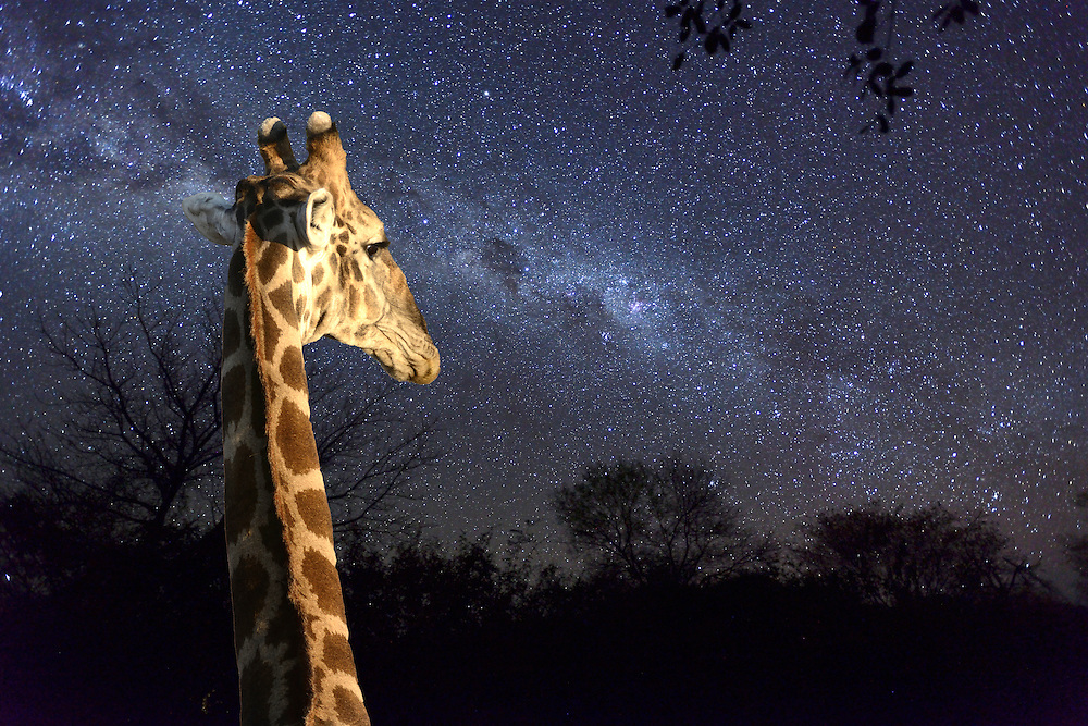 Night Sky,Namibia,Africa<br /> (m)