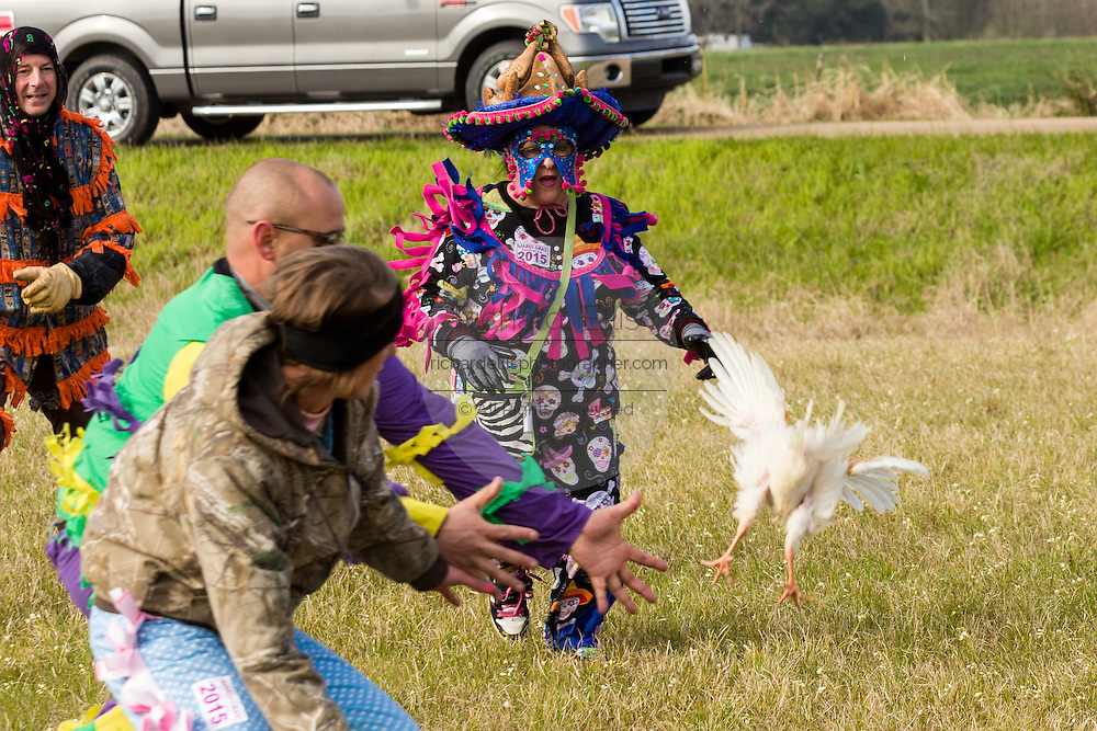 Traditional Cajun Mardi Gras costumed revelers chase a live chicken during the Courir de Mardi Gras chicken run on Fat Tuesday February 17, 2015 in Eunice, Louisiana. Cajun Mardi Gras involves costumed revelers competing to catch a live chicken as they move from house to house throughout the rural community.