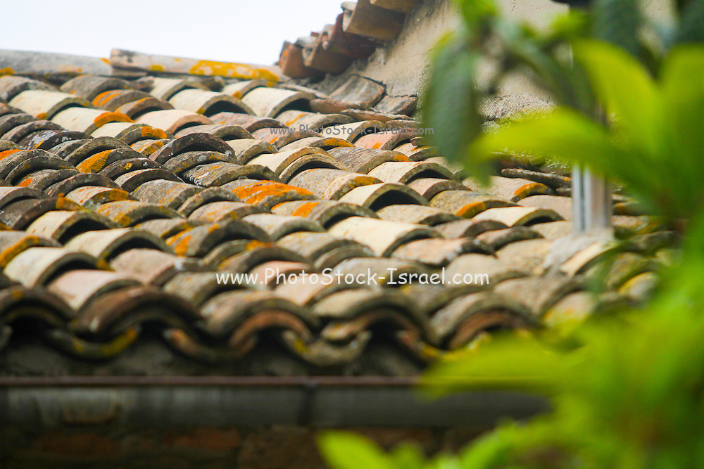 Roof with old shingles