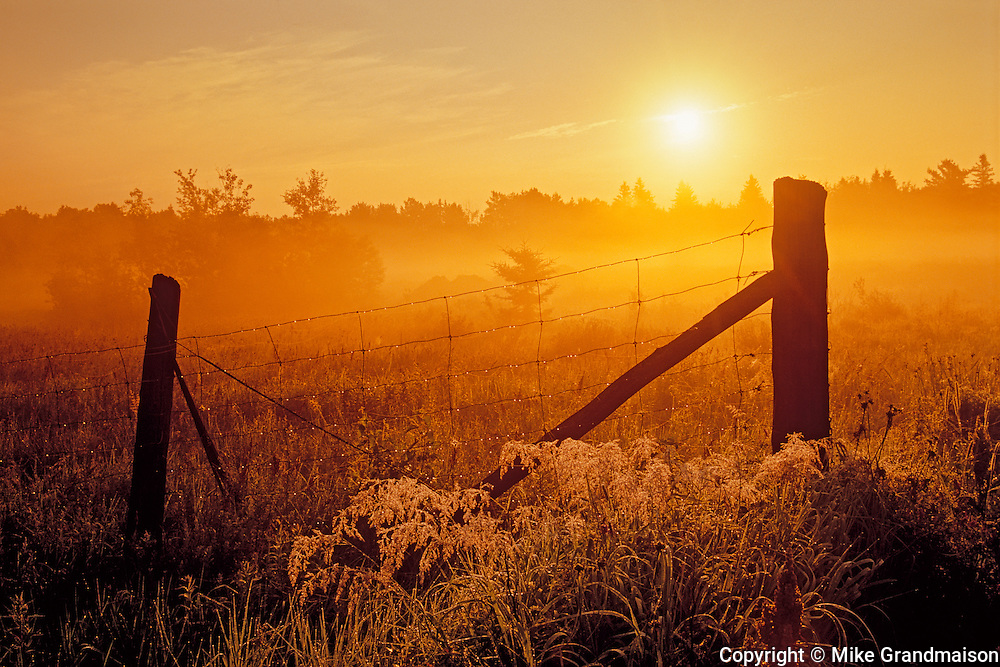 Fence at sunrise in fog<br /> Estaire<br /> Ontario<br /> Canada