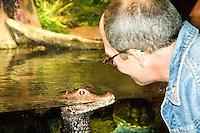 Baby Crocodile and Man at New Jersey State Aquarium