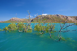 Mangroves are submerged at high tide in Dugong Bay on the Kimberley coast.