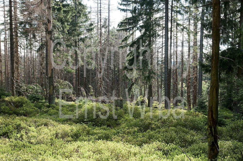 Lehrpfad Waldwandelweg bei Torfhaus, durch Borkenkäfer geschädigter Wald, Harz, Niedersachsen, Deutschland   nature trail Waldwandelweg near Torfhaus, Harz, Lower Saxony, Lower Saxony, Germany
