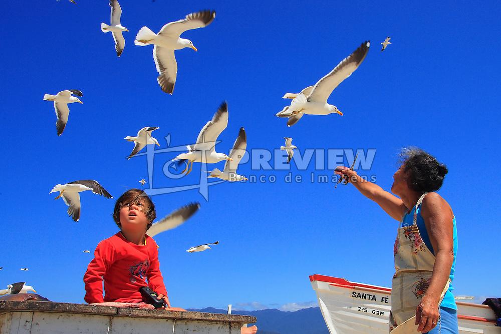 Milhares de Gaivotas na beira da Praia da Pinheira, Palho&ccedil;a, SC.<br /> FOTO: Jefferson Bernardes / Preview.com