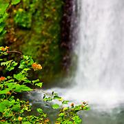 Multnomah Falls - OR