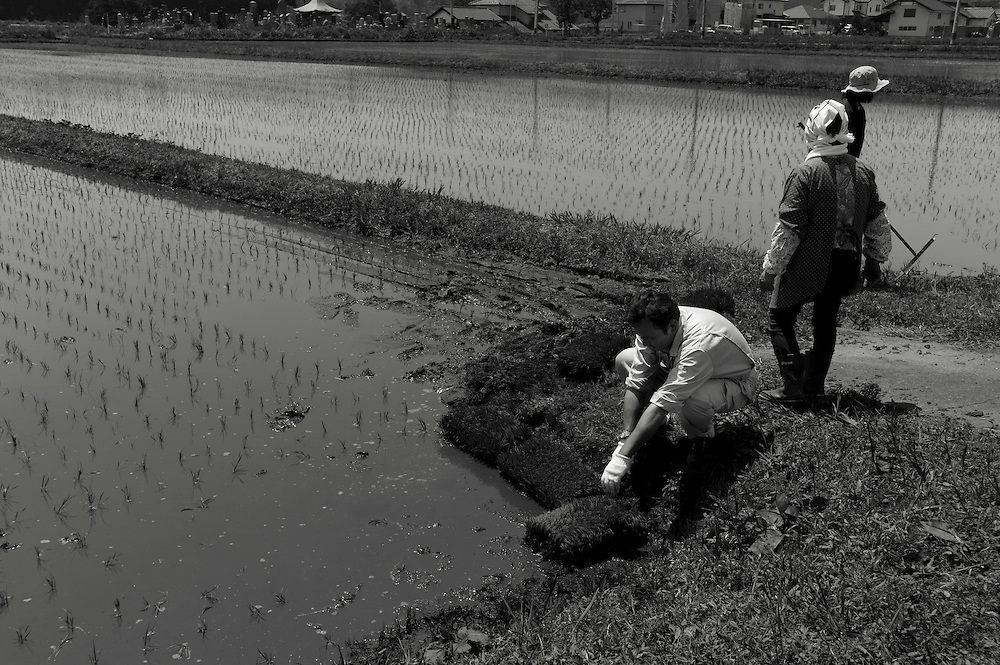 3 generations of  the YAMAUCHI family put the finishing touches  ot the First planting of Rice since  the Nuclear Diasaster of  2011 in the  Newly resettled town of Naraha.