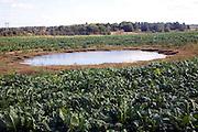Dew pond in vegetable field, Suffolk, England