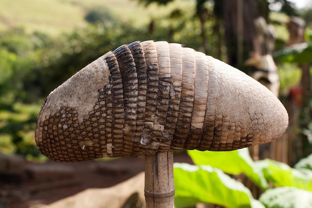 Carmo da Cachoeira_MG, Brasil...Detalhe do casco de um tatu em uma horta...Detail of a armadillo shell in the kitchen garden...Foto: LEO DRUMOND / NITRO