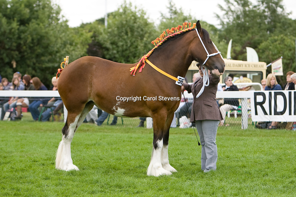 Great Yorkshire Show 2010<br /> Shire Classes