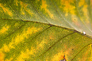 Leaves collected from Central Park and photographed with a macro lens to show the patterns, colors and details of each individual leaf.