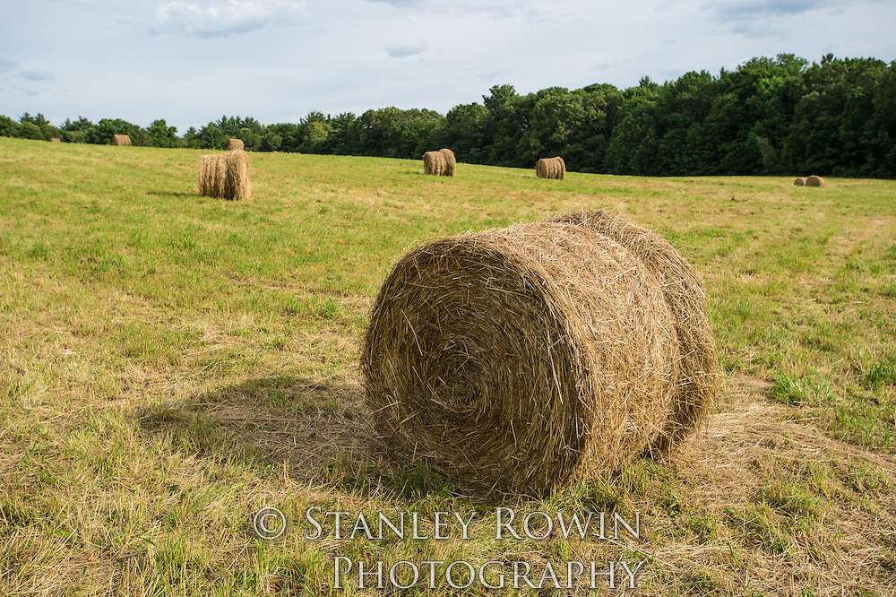 Bales of Hay in Field, Farm