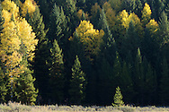 Round Prairie and forest in fall. Glacier National Park, northwest Montana.