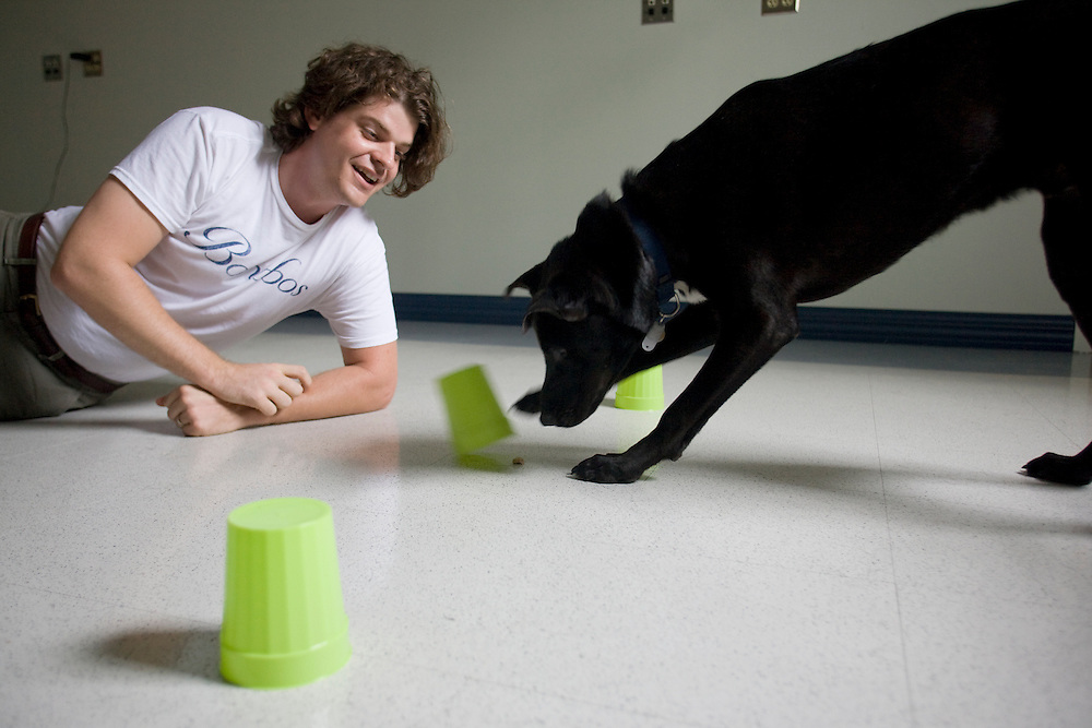 Prof. Brian Hare administers a cognition test with his dog and occasional test subject, Tas, short for Tasmanian Devil, inside the Duke Canine Cognition lab on the campus of Duke University in Durham, N.C., Monday, June 15, 2009.