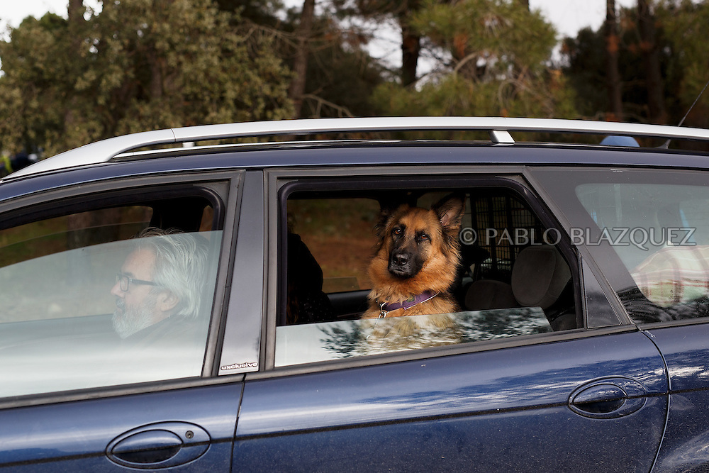04/12/2016. A dog sits on the back sit of a car during the Spanish National Mushing Contest on December 4, 2016 in Olvega, in Soria province, Spain. Around 300 competitors and a thousand dogs attended to the competition. (© Pablo Blazquez)