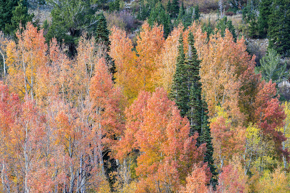 Fall colors in Utah's Little Cottonwood Canyon are one of the many places in utah to find amazing scenery in the Fall.