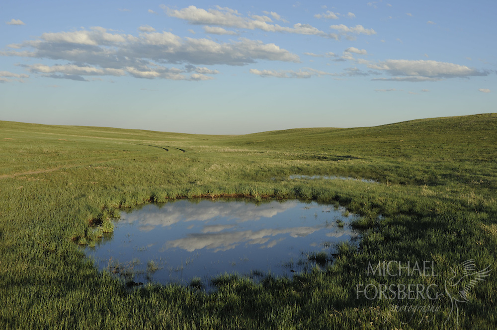 High Plains, shortgrass prairie region - ..Cumulus clouds reflect in a temporary pothole wetland, likely an old buffalo then cattle wallow, formed after a night of heavy rain. ...