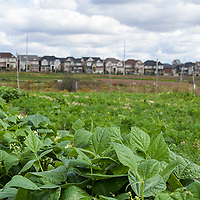 Suburban farming at McVean incubator farm in Brampton Ontario.
