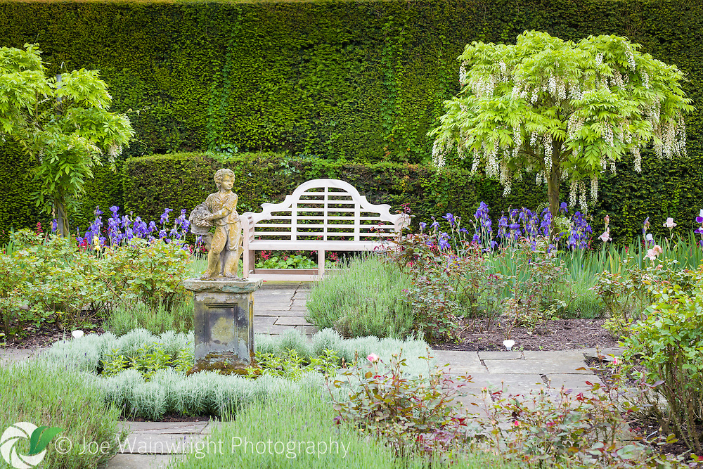 Standard white wisterias and flag irises provide early summer interest in the Flag Garden, at Arley Hall, Cheshire.