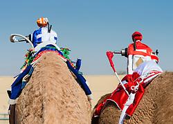 camel races at Dubai Camel Racing Club at Al Marmoum in Dubai United Arab Emirates