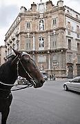 Palermo: Vigliena square also known as &quot;4 canti&quot;.<br /> Palermo; piazza Vigliena comunemente chiamata &quot;4 canti&quot;