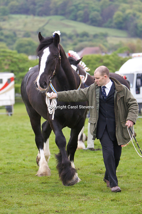 D Beardsmore's Castle Clough Roy    S Ithersay Joseph    Three Year Old Gelding or Mare Class