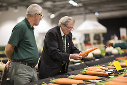 September 16, 2016 - Harrogate, Yorkshire, UK - Harrogate UK. Judging has begun this morning in the Giant vegetable competition that see's competitors from across the UK show their biggest Carrot's, Cucumbers, Cabbages, Onion's & Tomatoes competing for the title of heaviest & longest at the Harrogate Autumn Flower Show. (Credit Image: © Andrew Mccaren/London News Pictures via ZUMA Wire)