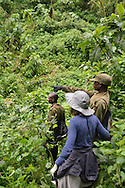 A gorilla trekker and two Uganda Wildlife Authority rangers in the jungle of Uganda's Bwindi  Impenetrable Forest, one of Africa's rare, remaining gorilla habitats, and a UNESCO World Heritage Site.