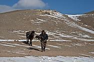 Mongolia. Terelg valley in winter . eagle hunter   Ulan Baatar /la vallee de Terelg en hiver. aigle et son aiglier  Oulan Bator - Mongolie