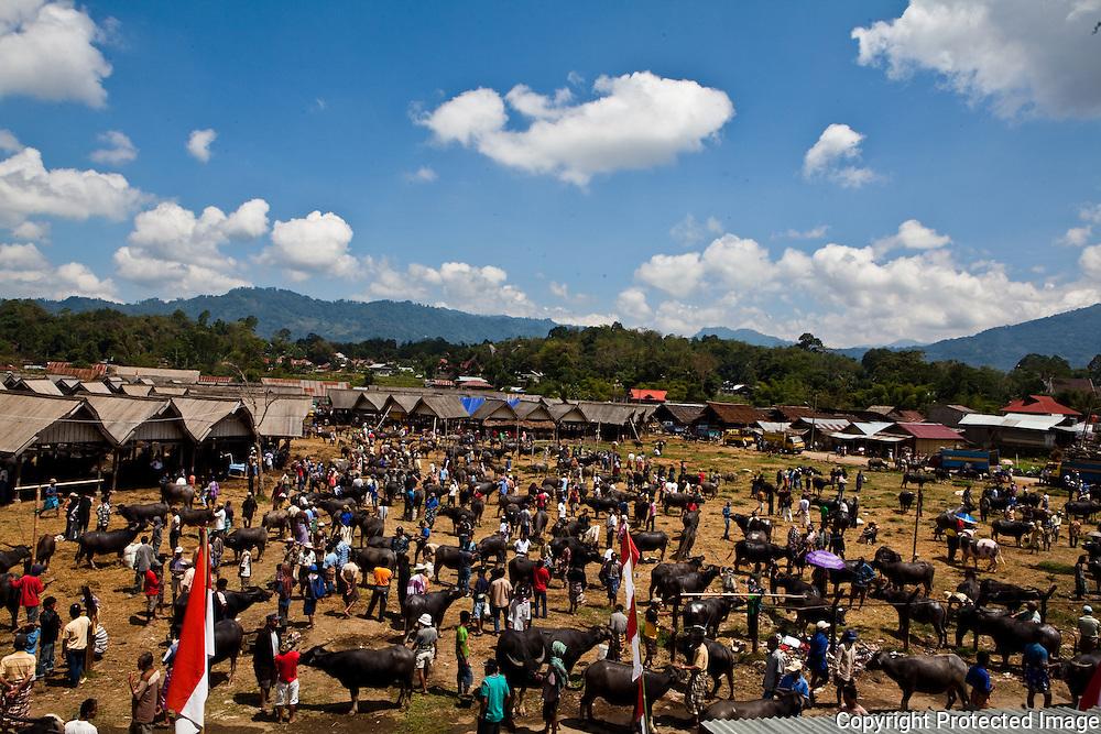 Overview of buffalo market Rantepao , Sulawesi, Indonesia
