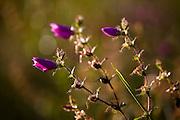 Aquidauana_MS, Brasil...Detalhe de uma flor na fazenda Rio Negro no Pantanal...A flower in Rio Negro farm in Pantanal...Foto: JOAO MARCOS ROSA / NITRO