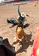 Bull rider Zeb Lanham of Sweet, Idaho breaks out of the chute at the Cheyenne Frontier Days rodeo at Frontier Park Arena July 25, 2015 in Cheyenne, Wyoming. Frontier Days celebrates the cowboy traditions of the west with a rodeo, parade and fair.