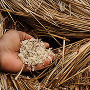 A man displays a handful of unrefined salt from the Songhor Lagoon. Stored under protective thatch to keep it dry, it is being stockpiled for sale during the time of year when prices are highest.