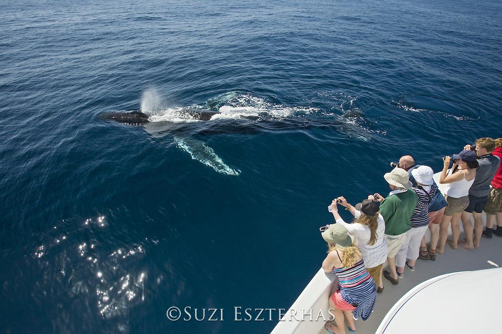 Humpback Whale<br /> Megaptera novaeangliae<br /> Baja California, Mexico