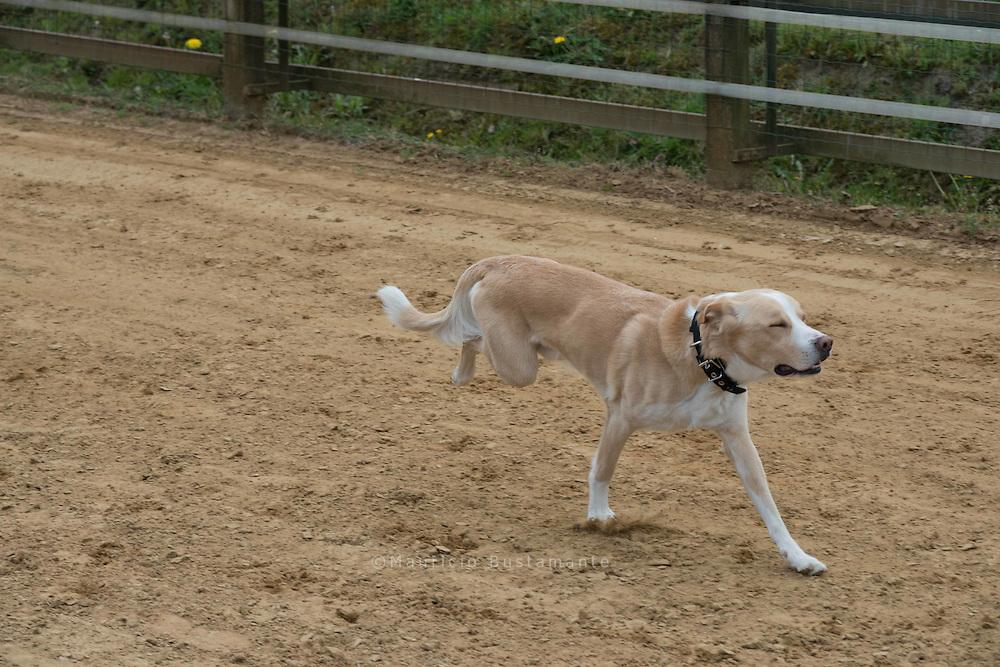Das Spaßrennen beim NWR in Hamburg<br /> <br /> Seit 2004 findet in Hamburg beim Norddeutschen Windhundrennverein (NWR) regelmäßig das Hunderennen für Jederhund statt. Ob Mops, Labrador oder Schäferhund: Jeder, der Spaß am Laufen hat, darf am 1.  Mai mitmachen. Die einzige Einschränkung: Windhunde dürften nicht starten!