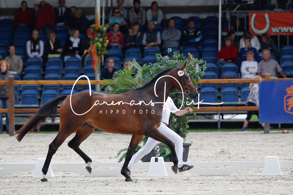 049 - Charisma<br /> KWPN Paardendagen Ermelo 2010<br /> © Dirk Caremans