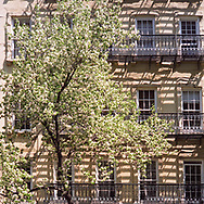 Pear blossoms, shadows and wrought iron fire escapes on 81st street between Third and Second Avenue, New York City.