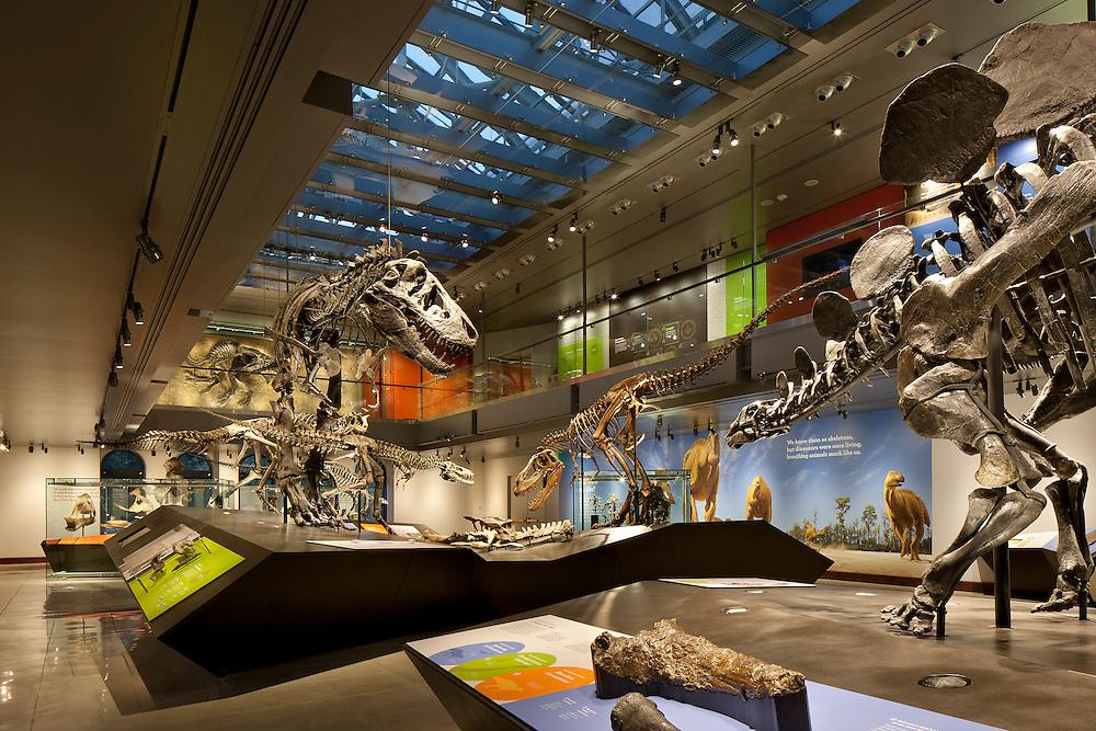 Natural History Museum Aug 2011<br /> Job 5740