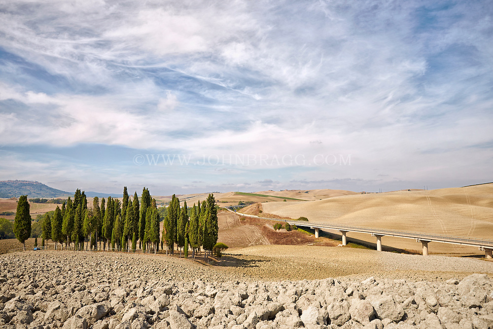 A grouping of cypress trees provides a vibrant oasis Val d'Orcia, Italy.