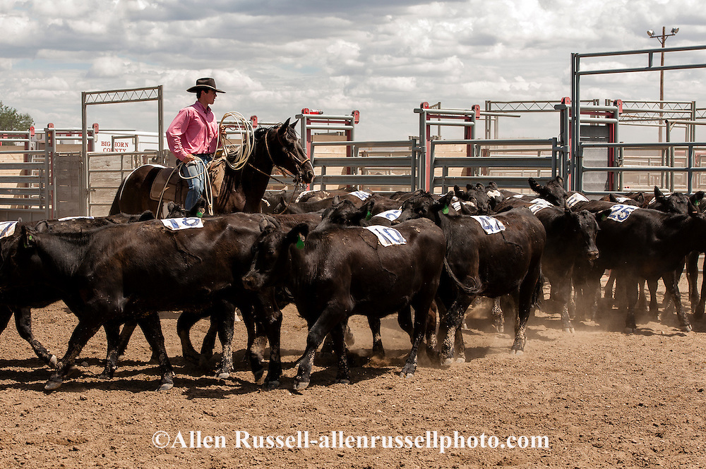 Will James Roundup, Ranch Rodeo, Yearling Doctoring, Chad Donley, Hardin, Montana.