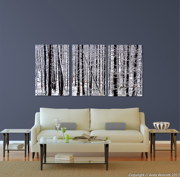 Room Display - Living Room<br /> Triptych - Three 24 X 36 Canvases<br /> Winter Trees - The BUrn<br /> Grand Teton National Park, Wyoming<br /> ID# 2017 0923 8378 1, 2, 3<br /> <br /> templates by: www.arianafalerni.com