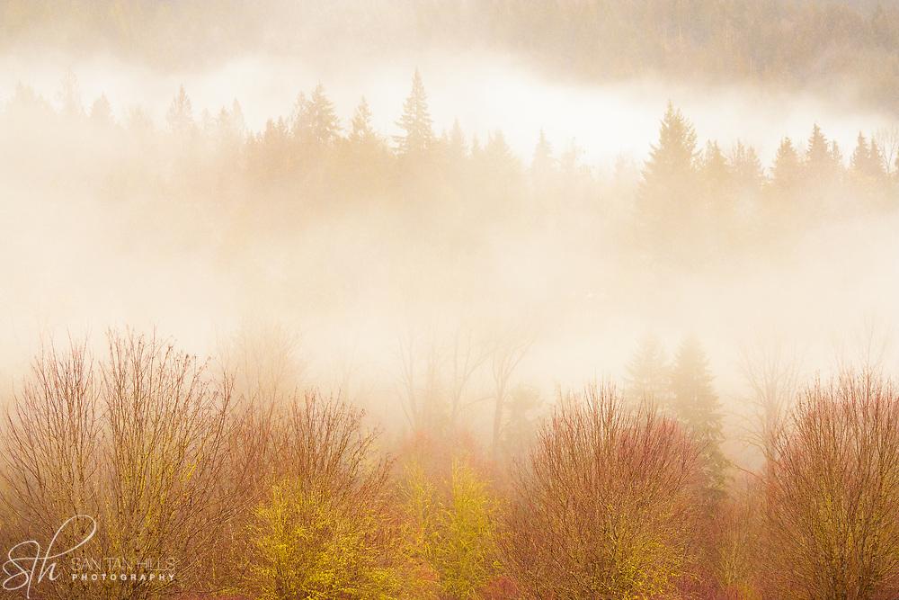 Foggy morning in Skagit Valley, Washington
